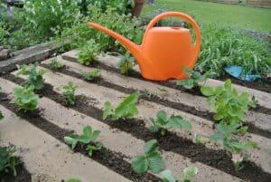 outdoor garden dirt