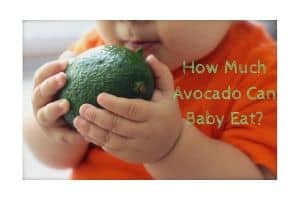 How Much Avocado Can Baby Eat
