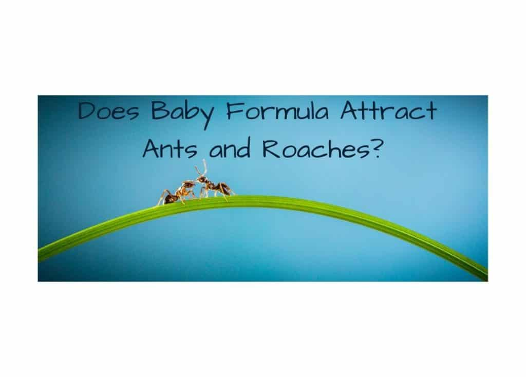 Does Baby Formula Attract Ants and Roaches