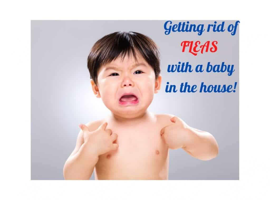 Getting rid of fleas with a baby in the house!