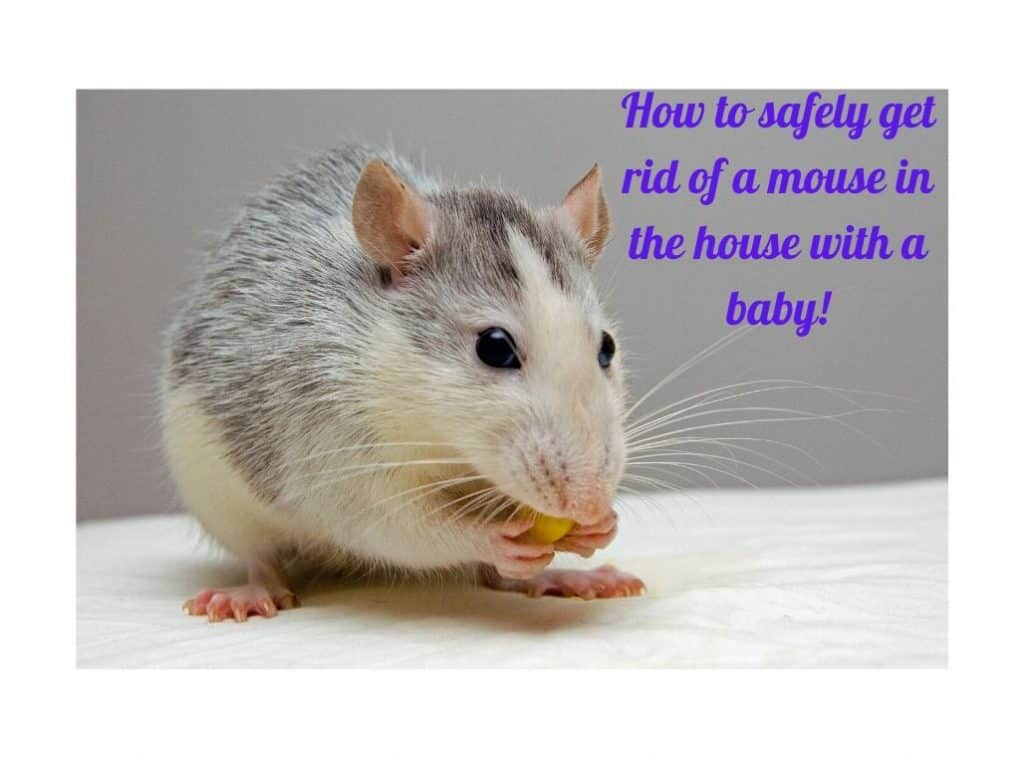 How to safely get rid of a mouse in the house with baby!